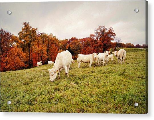 Autumn Pastures Acrylic Print