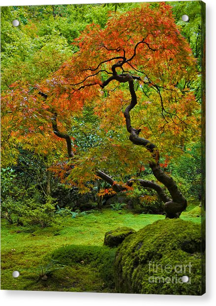 Autumn's Paintbrush Acrylic Print