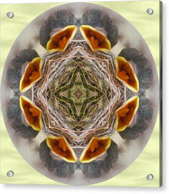 Baby Bird Kaleidoscope Acrylic Print