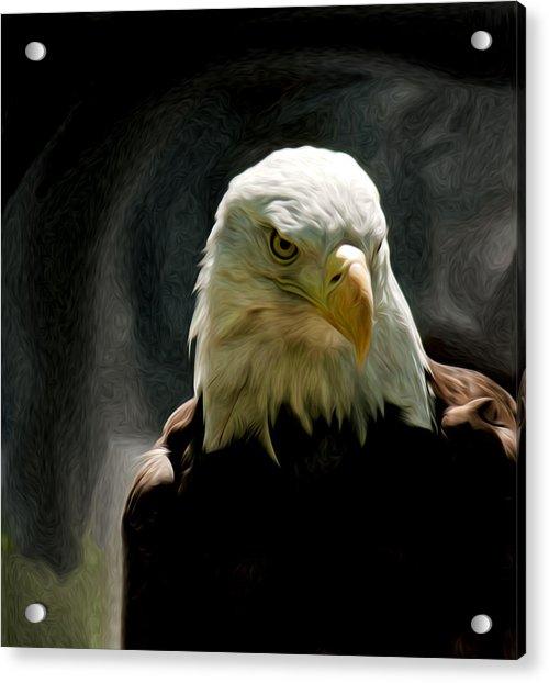 Bald Eagle Giving You That Eye Acrylic Print