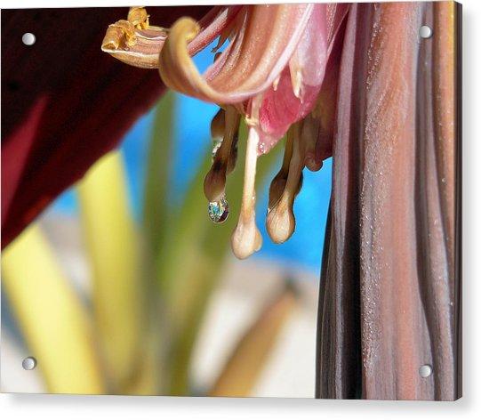 Banana Blossoms Acrylic Print