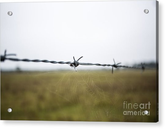 Barbed Wires Acrylic Print by Mina Isaac