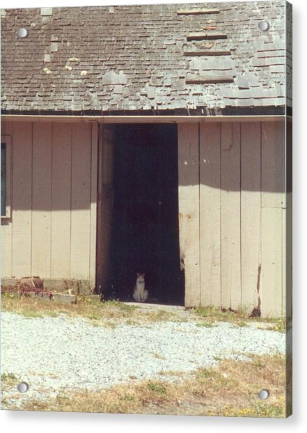 Acrylic Print featuring the photograph Barnyard Cat by Cynthia Marcopulos