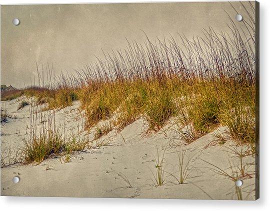 Beach Grass And Sugar Sand Acrylic Print