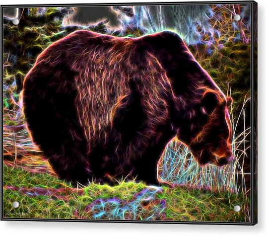 Colorful Grizzly Acrylic Print
