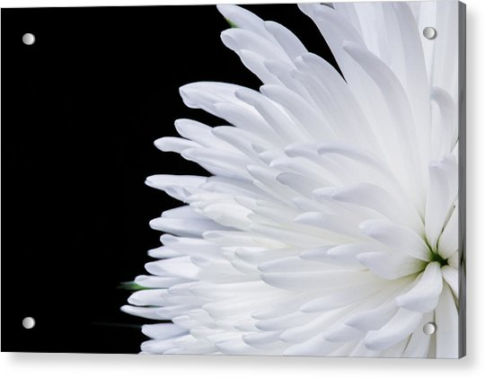 Beauty In Contrast Acrylic Print