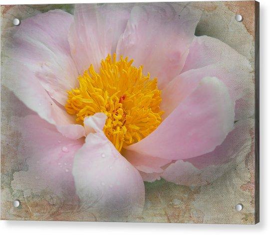 Beauty Woven In Acrylic Print