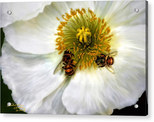 Bees On A Flower Acrylic Print
