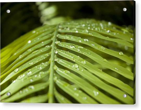 Acrylic Print featuring the photograph Bending Ferns by Carolyn Marshall