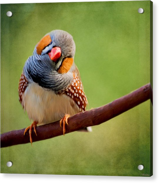 Bird Art - Change Your Opinions Acrylic Print
