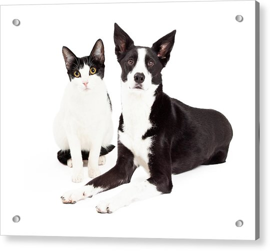 Black And White Cat And Dog Acrylic Print