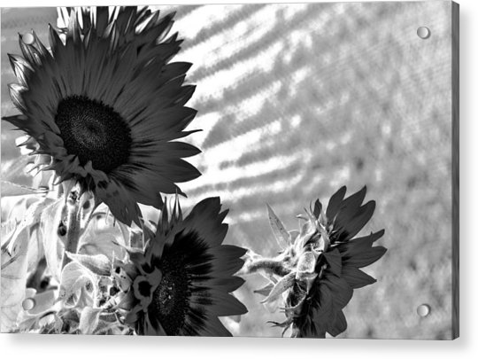 Black And White Flower Of The Sun Acrylic Print