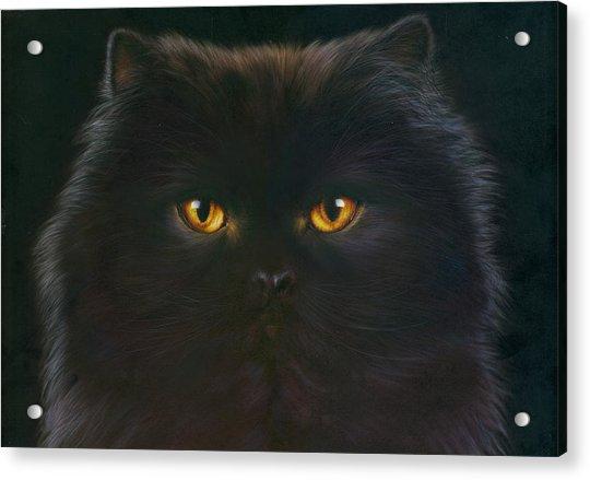 Black Persian Acrylic Print