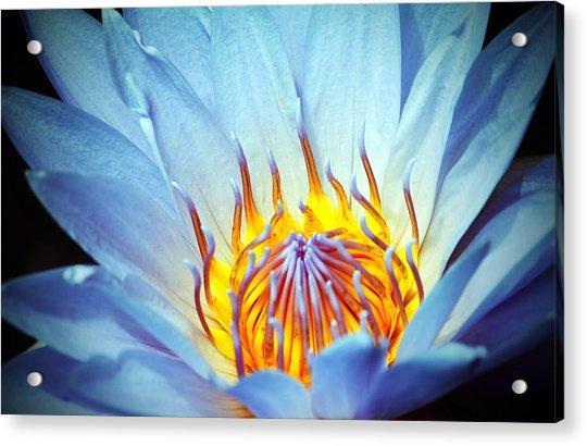 Acrylic Print featuring the photograph Blue Lotus by Cynthia Guinn