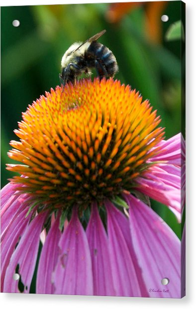 Blue Striped Bee Acrylic Print