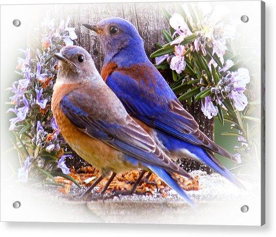 Bluebird Wedding Acrylic Print