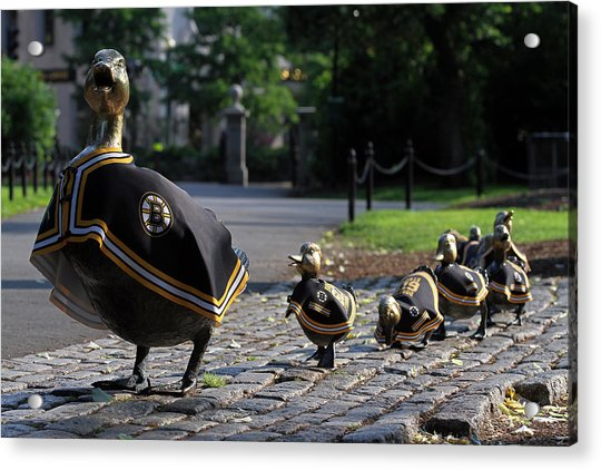 Boston Bruins Ducklings Acrylic Print