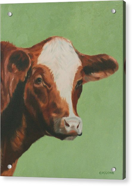 Bovine Beauty Acrylic Print