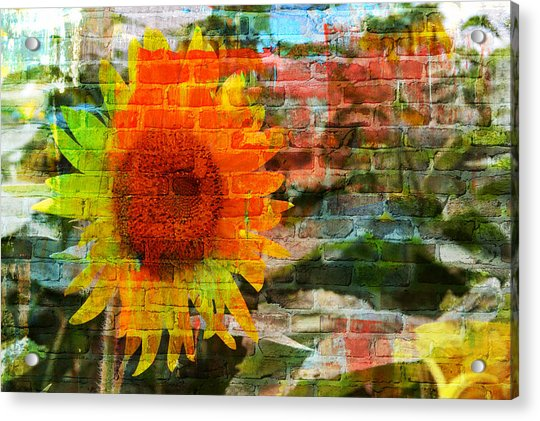 Acrylic Print featuring the photograph Bricks And Sunflowers by Alice Gipson
