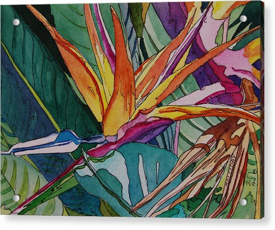 Brillant Bird Of Paradise Acrylic Print