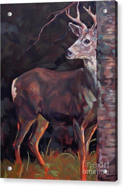 Buck At Sullivan Acrylic Print