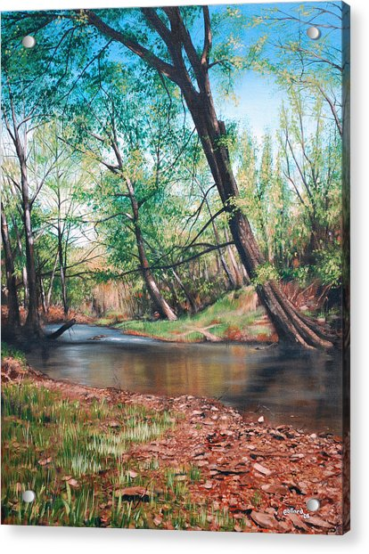 Bull Creek Acrylic Print
