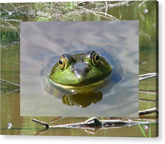 Bull Frog And Pond Acrylic Print