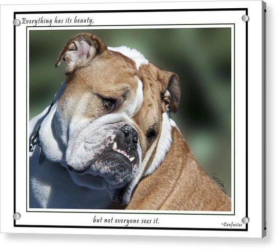 Bulldog Beauty Acrylic Print