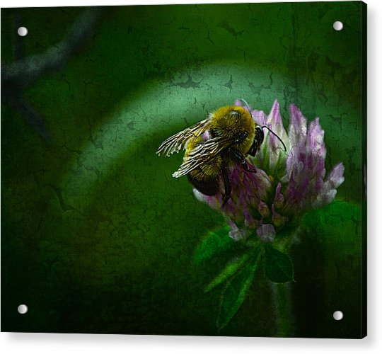 Bumble Bee Tattered Wings Art 2 Acrylic Print