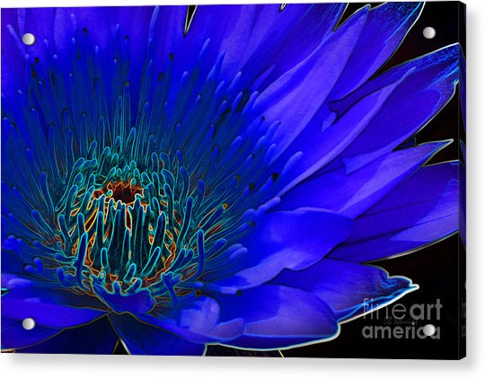 Butterfly Garden 11 - Water Lily Acrylic Print