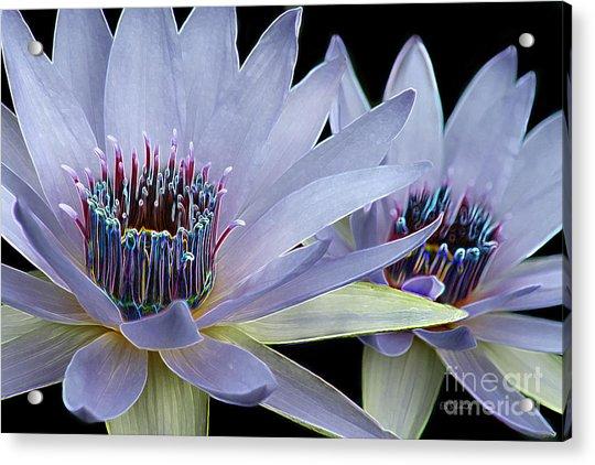 Butterfly Garden 26 - Water Lilies Acrylic Print