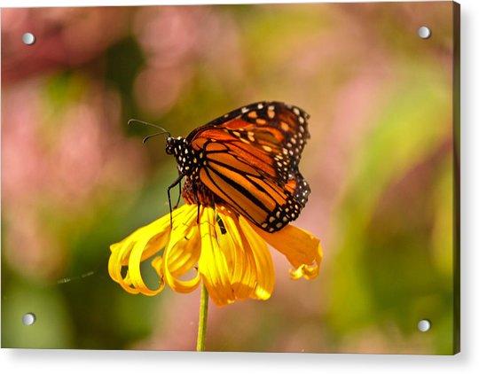 Butterfly Monet Acrylic Print