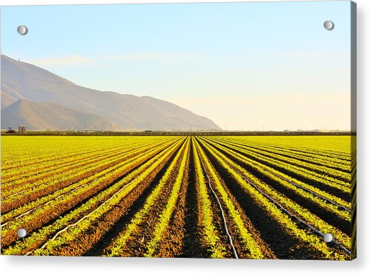 Cali Grows Acrylic Print