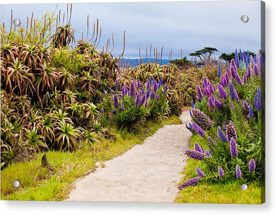 California Coastline Path Acrylic Print