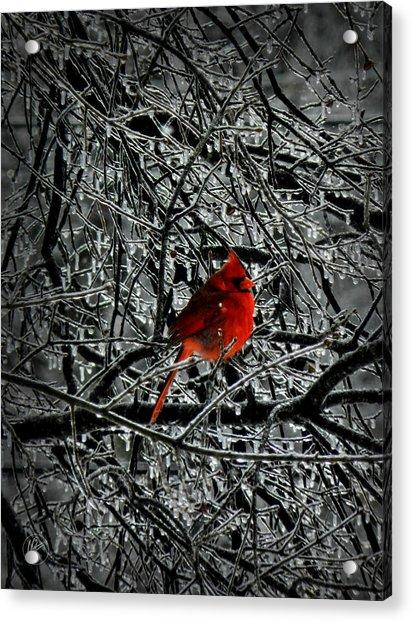 Cardinal In An Ice Storm 001 Acrylic Print