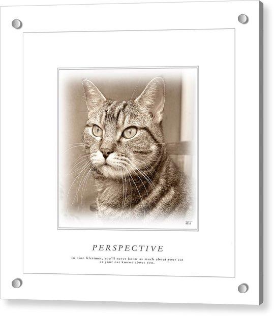 Cat Reflections 1 Acrylic Print