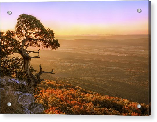 Acrylic Print featuring the photograph Cedar Tree Atop Mt. Magazine - Arkansas - Autumn by Jason Politte