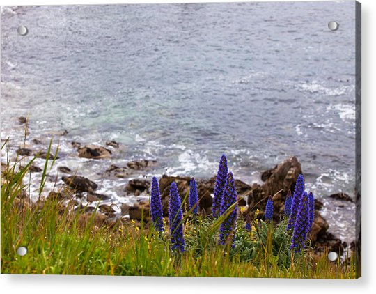 Coastal Cliff Flowers Acrylic Print