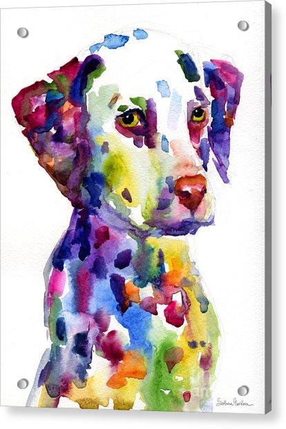 Colorful Dalmatian Puppy Dog Portrait Art Acrylic Print