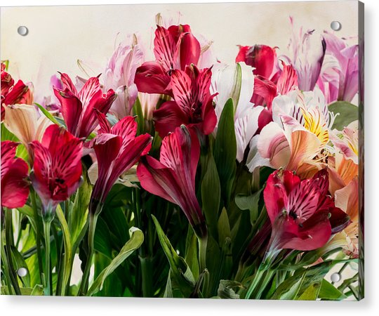 Colorful Peruvian Lillys Acrylic Print