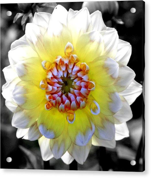 Colorwheel Acrylic Print