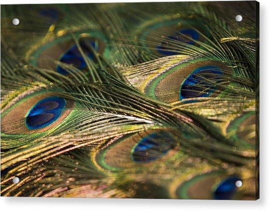 Colour And Design Acrylic Print