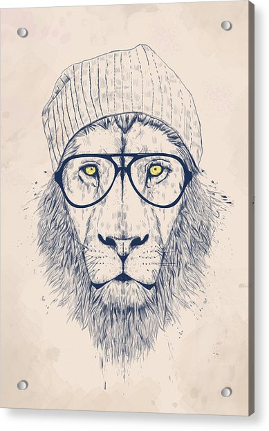 Cool Lion Acrylic Print