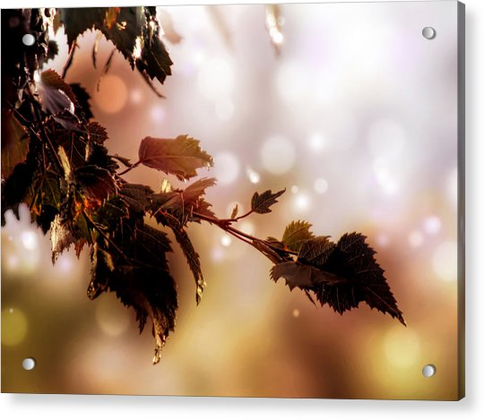 Acrylic Print featuring the photograph Copper Birch by Valerie Anne Kelly