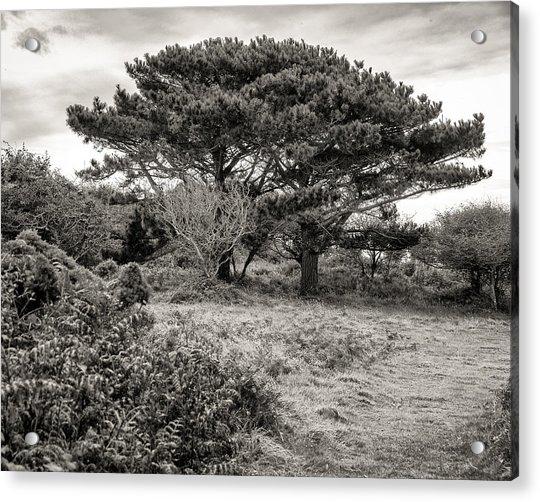 Cornish Delights Acrylic Print