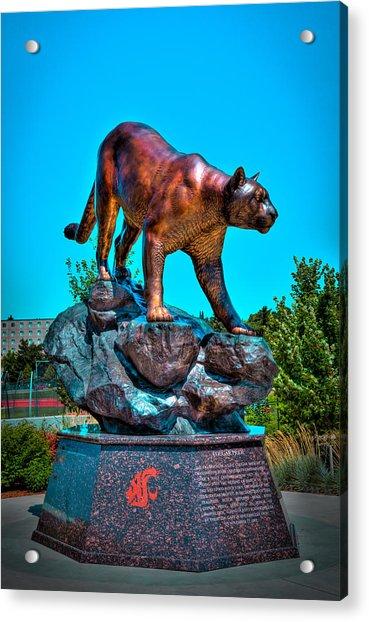 Cougar Pride Sculpture - Washington State University Acrylic Print