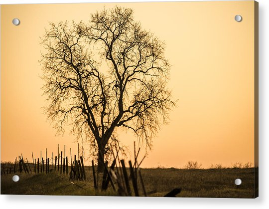 Country Fence Sunset Acrylic Print