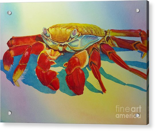 Colorful Crab  Acrylic Print
