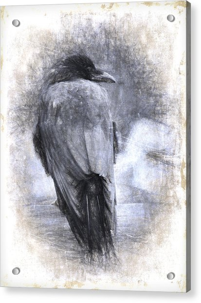 Crow Sketch Painterly Effect Acrylic Print