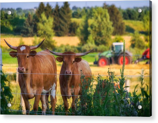 Acrylic Print featuring the photograph Curiousity by Garvin Hunter